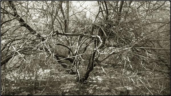 springbush 2 by FabioKeiner