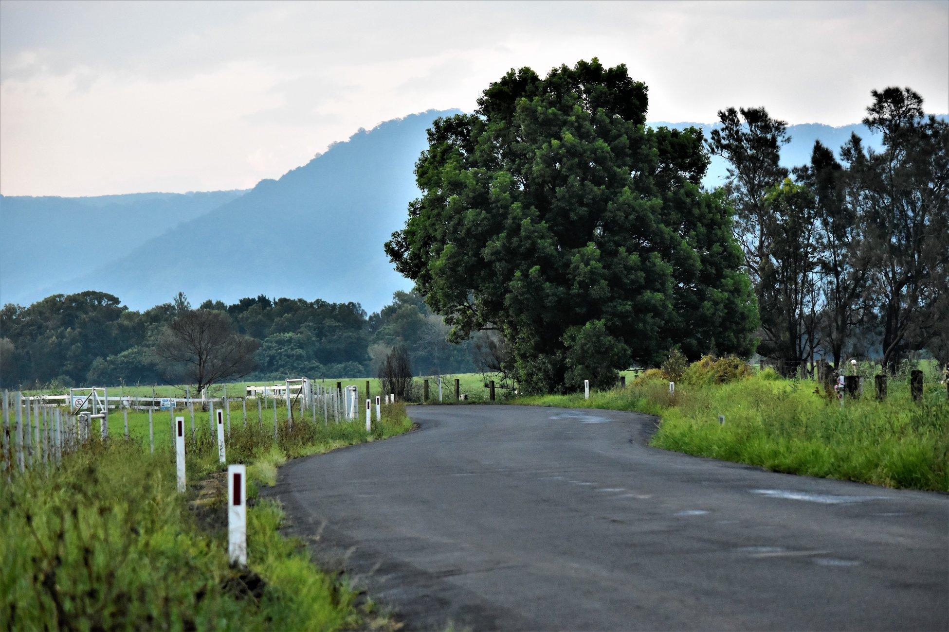 curled road
