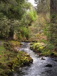 Stream at Bodnant garden