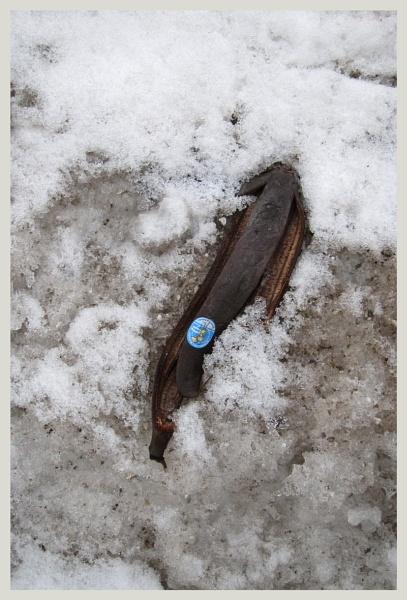 banana peel by leo_nid