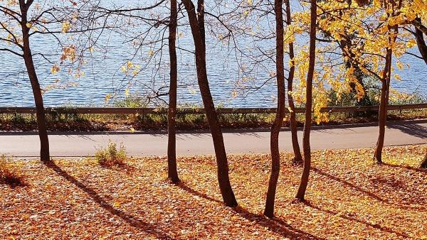Golden autumn by Sony2
