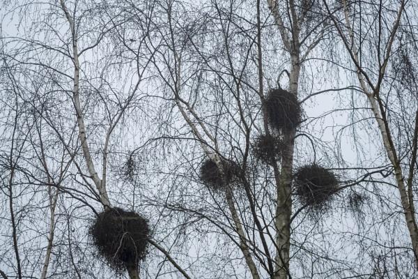 Nests by OverthehillPhil