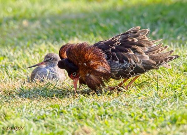 You ignoring me?..I\'m doing my best! by ladynewbury