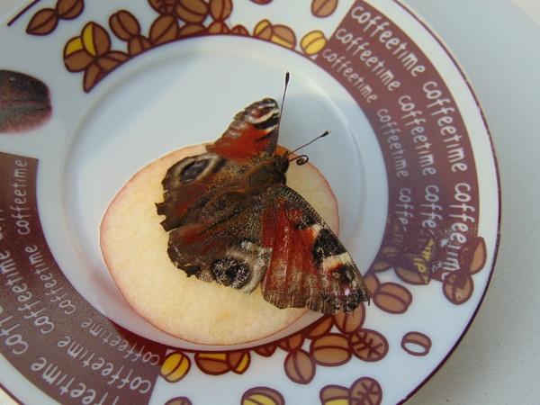 Butterfly 1 by LianaMegne