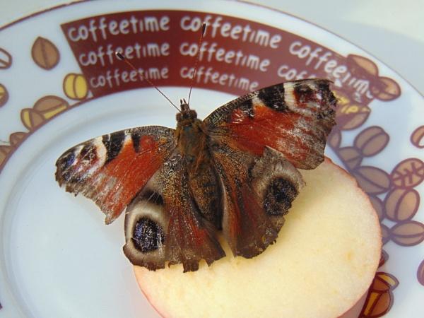 Butterfly 2 by LianaMegne