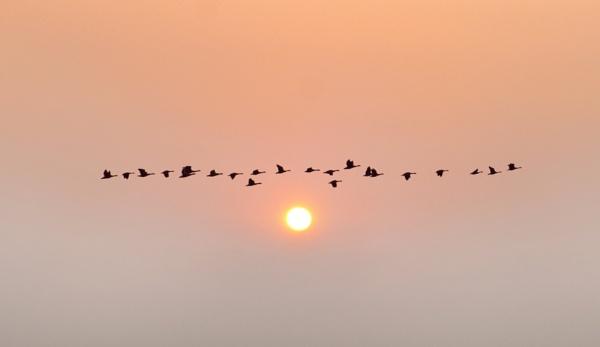 Morning Flight by adriansart