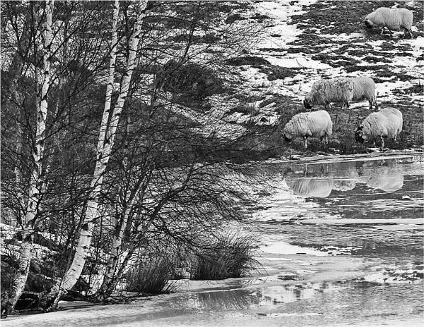 By the Loch by MalcolmM
