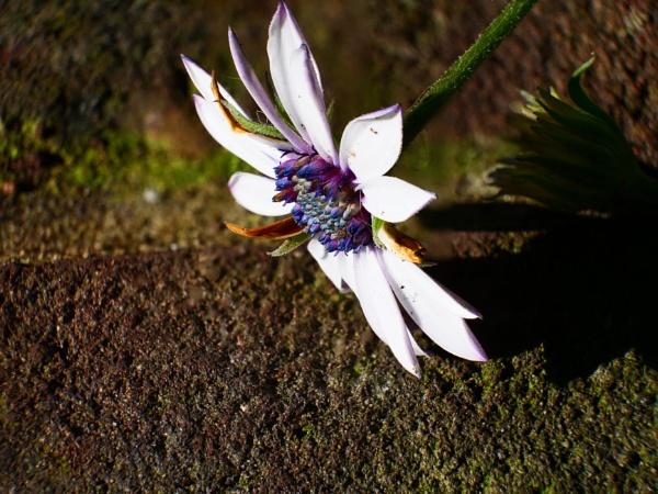 Winter Flower by fieldgun1976