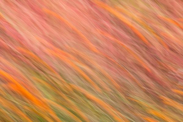 Flame by jyotirmoy