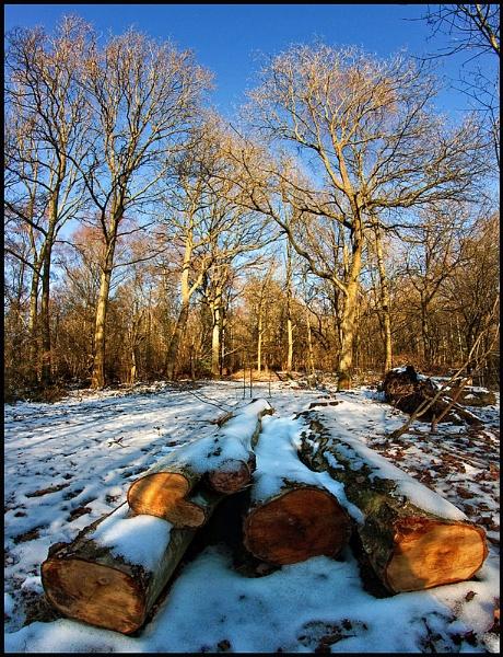 Wintry woodland.... by Niknut
