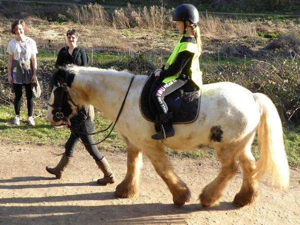 Beware Pony Crossing by Gypsyman