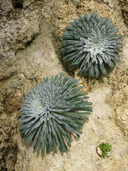 Grown on stone by derekp
