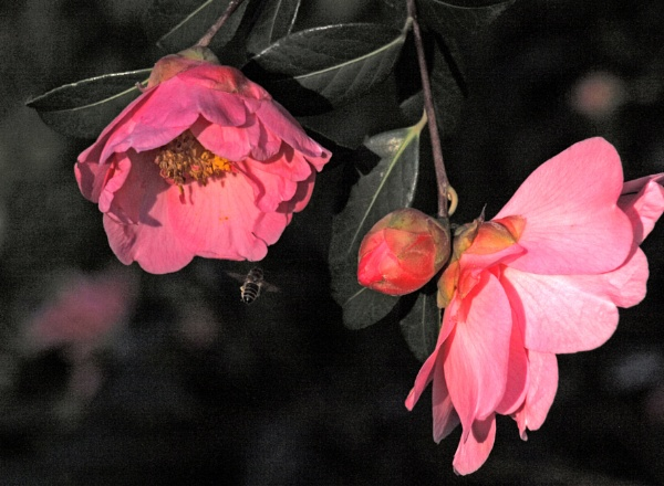 Bee and Camelia by JuBarney