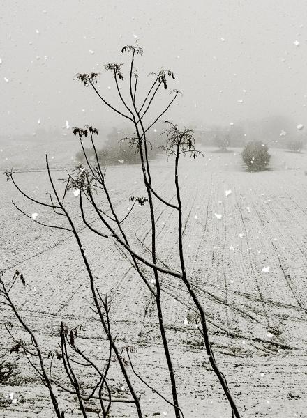 Snowfall by lanalang