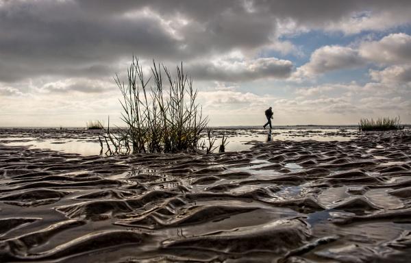 Low Tide Salt Marsh by carper123