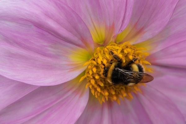 Honey Bunch by Fefe
