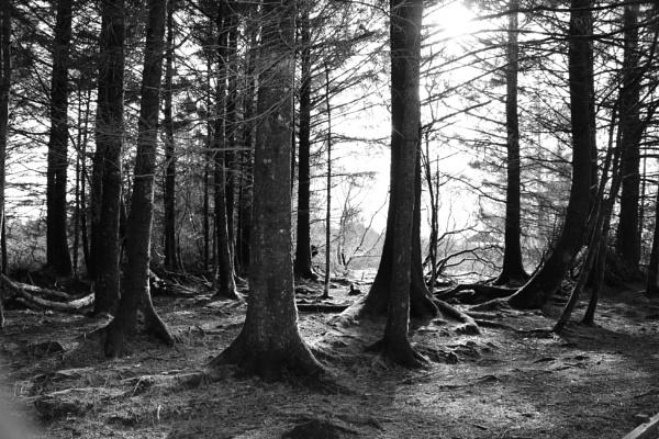 Forestry by carol01