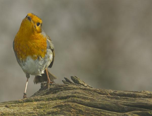 Friendly little chap by clubcard