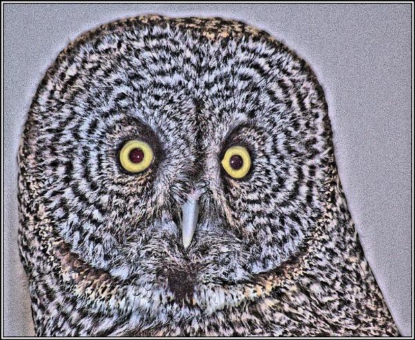 The Owl by DonSchaeffer