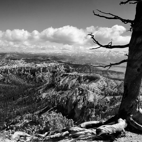 Bryce Vista by Minty805