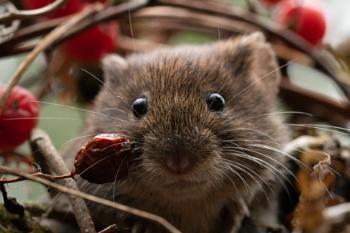 Don't You Go Near My Snacks!