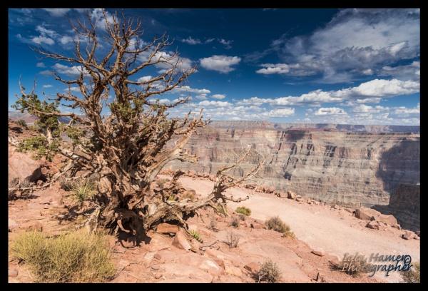 Desert brush and the Grand Canyon by IainHamer