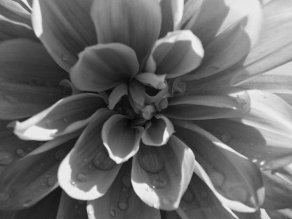 Floral Tears by adagio