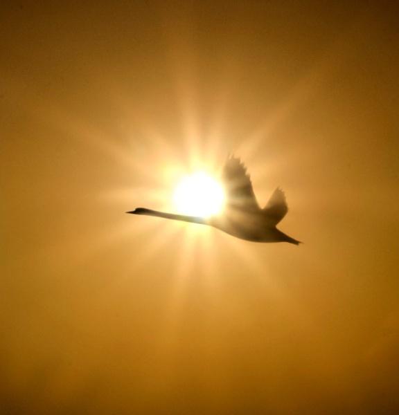 Sun Stroke by adriansart