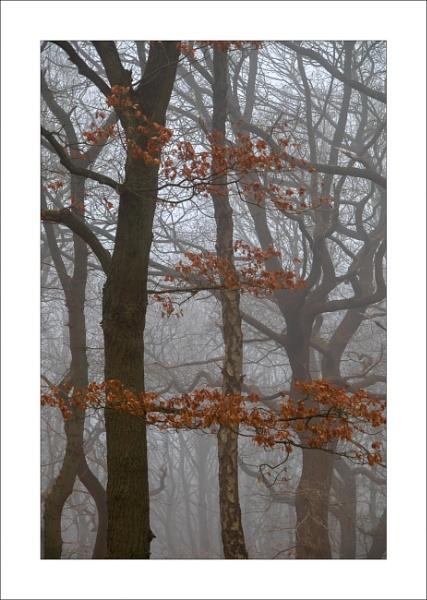Strawberry Hill Heath by Steve-T