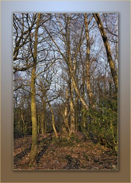 Winter Woodland by LynneJoyce