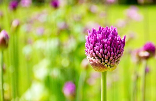 flower by probie
