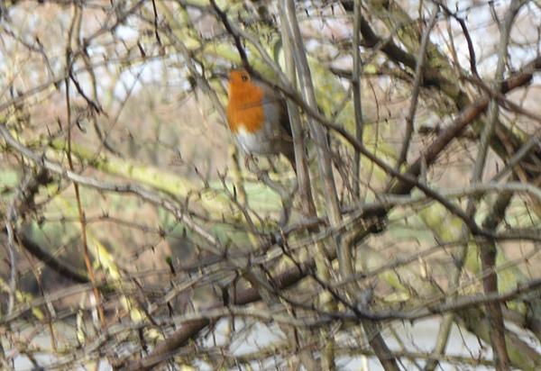 I shot the Robin (1). by Gypsyman