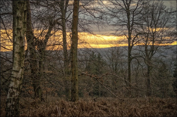 Sunset Forest of Dean by Kilmas