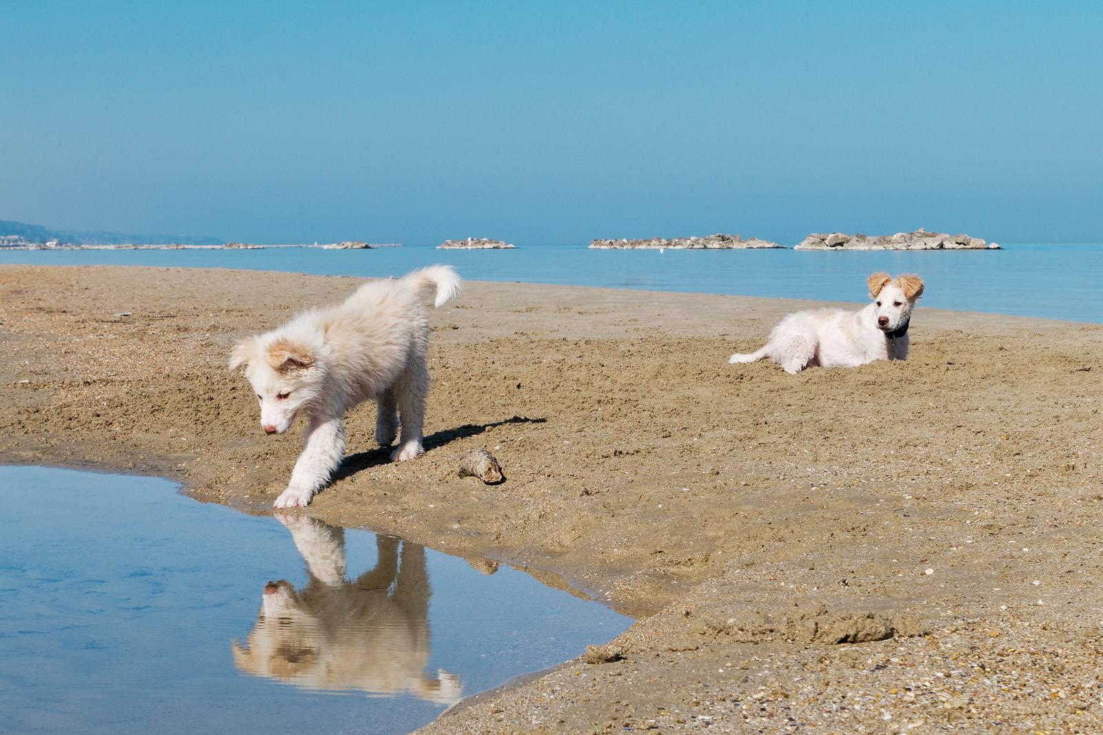 Mirror on the Beach