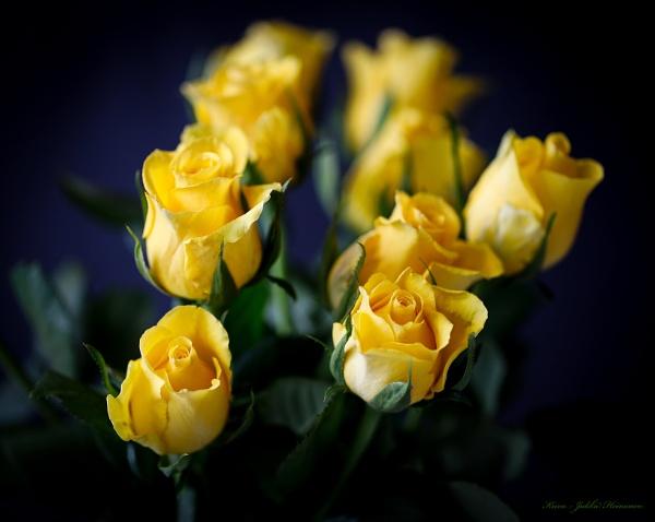 Yellow roses. by Jukka