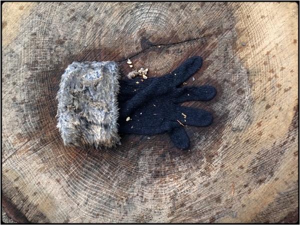 the glove by FabioKeiner