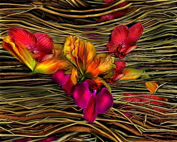 Magic Garden   (18) by mtuyb