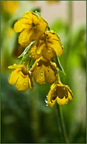 raindrops... by estonian