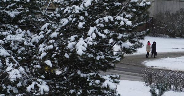 Snowy pine by SauliusR