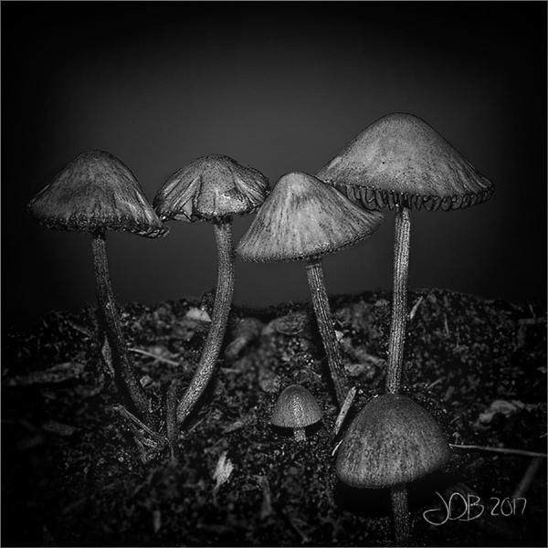 Fungi by Big_Beavis