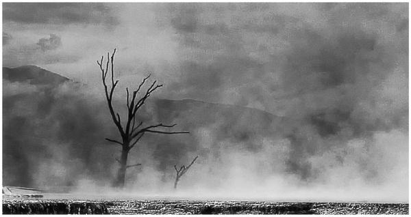 Dead tree\'s by dven