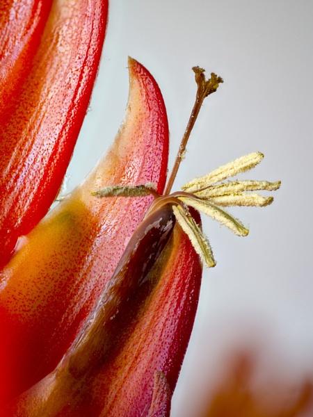Bromelia by TreefrogPhotography