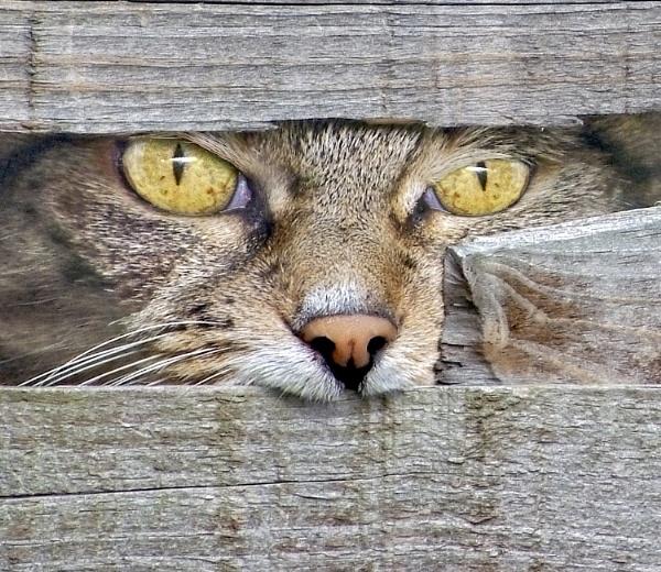 Let Me In!! by adriansart