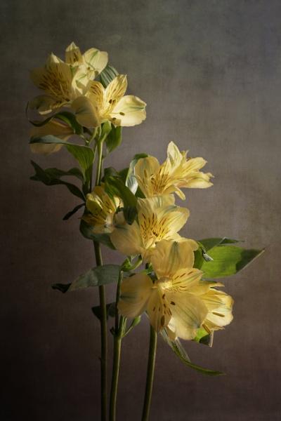 Sunshine Yellow by swilliams71