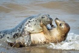 A Seal Embrace