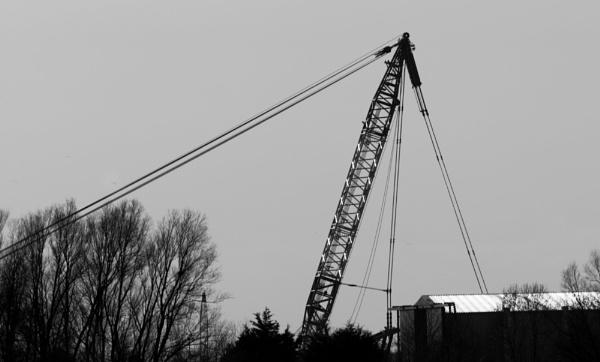 Crane by oldgreyheron