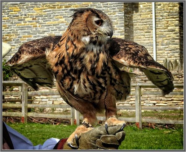 Eagle Owl by PhilT2