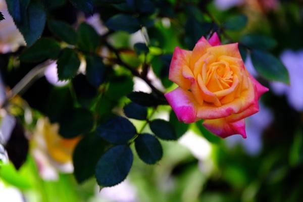 flowers by hoyingbun