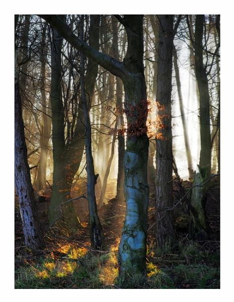 Tree Art .. by woodlark