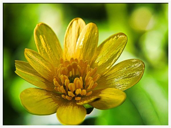 SPRING FLOWER. by kojack